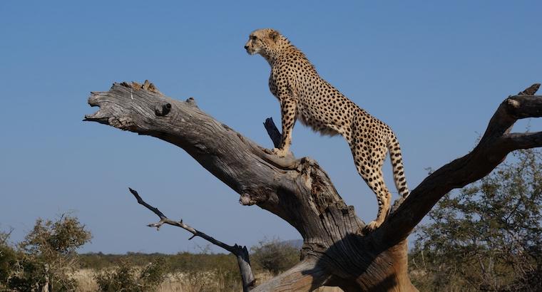 Top 10 hurtigste dyr